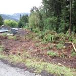 伐採画像1