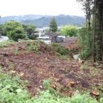 伐採画像2