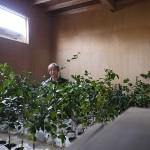 camellia_nursery001